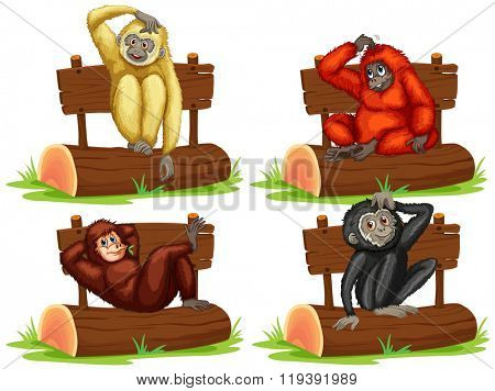 Four gibbons sitting by the sign illustration