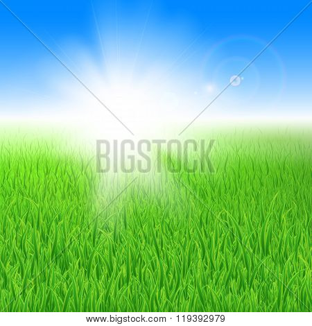 Green grass under the sun