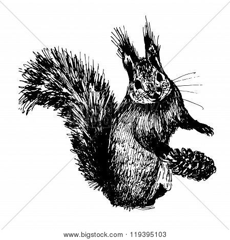 small furry squirrel sketch hand-drawn ink vector illustration