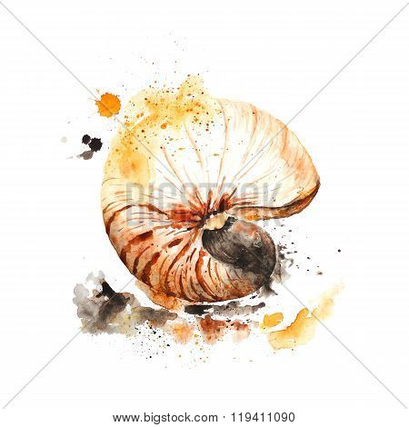Nautilus shell made in watercolor technique