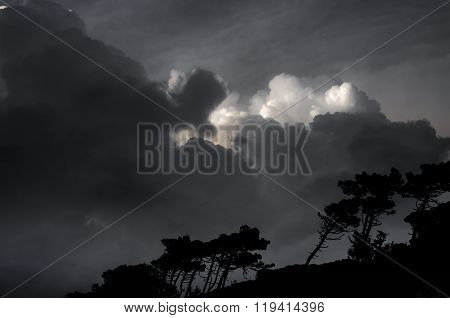 Stormy Clouds Over The Forest Of Pine Trees