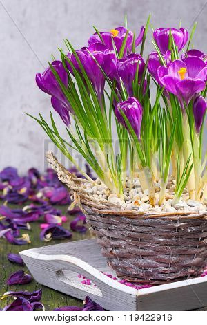 Crocuses In A Basket, Table Decorations