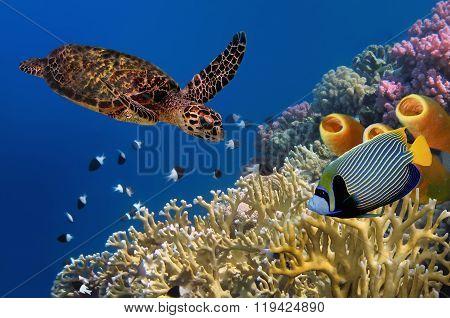 Yellow Tube Spongesr. Red Sea,
