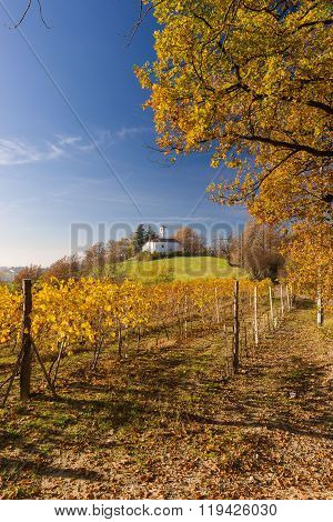 Vineyard Hills In Autumn