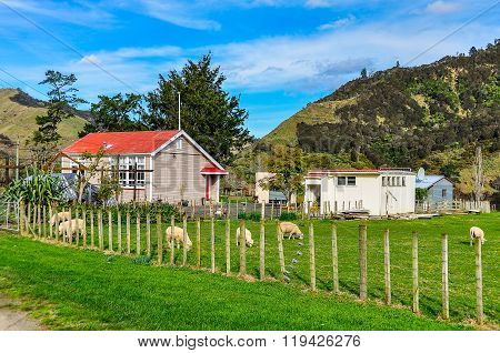 Typical Farm In Whanganui National Park, New Zealand