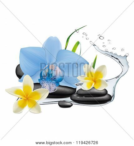 Orchid Flower, Water Splash And Zen Stone. Vector Illustration