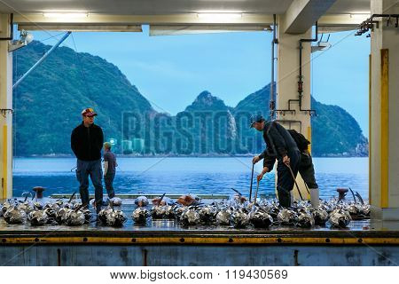 WAKAYAMA JAPAN - NOVEMBER 20 2015:  Katsuura Nigiwai Market is the biggest fish market in Wakayama prefecture Maguro tuna auctions held every morning started at 7.30 daily
