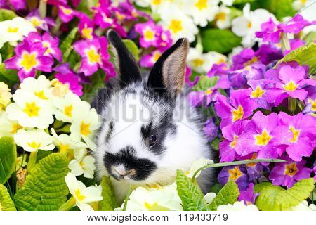 Easter Bunny between Primroses