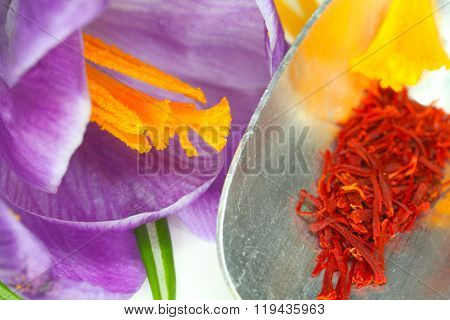 Saffron Threads And Pistils Of Crocus
