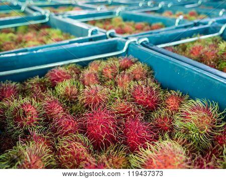 Many Rambutan In Baskets At The Wholesale Market.