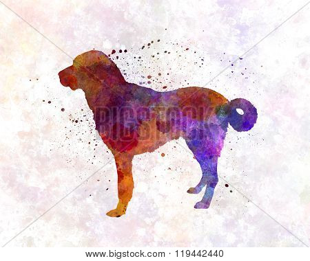 Anatolian Shepherd Dog In Watercolor
