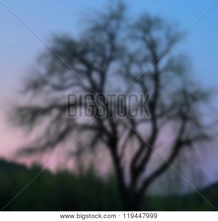 Blurred old black wood in the dusk alone