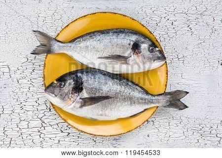 Raw Fresh Dorado Fish On Yellow Plate On White Background. Top View.