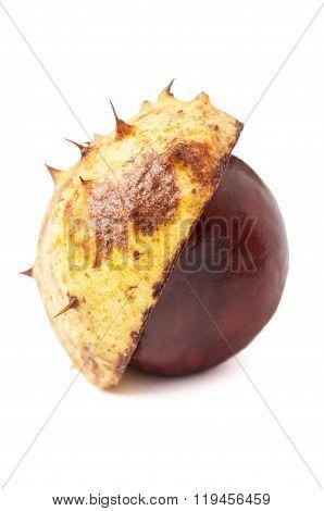 Half Horse Chestnut.