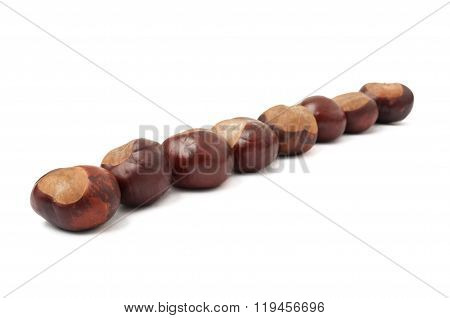 Lined Up Chestnuts