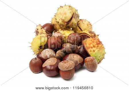 Horse Chestnuts And Acorns Isolated On White