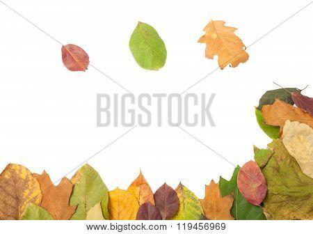 Frame Of Autumn Leaves