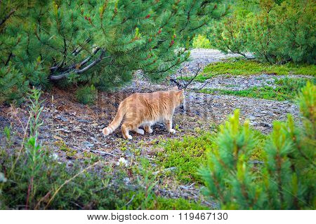 Cat Walking In The Woods