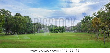 Green Lawn Of A Spacious City Park