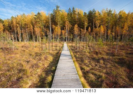Wooden path way pathway from marsh swamp to beautiful forest. Au