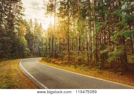 winding road path walkway through autumn forest at sunset sunris
