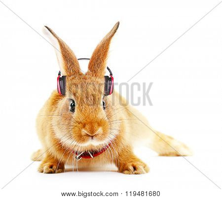 Red rabbit with headphones isolated on white