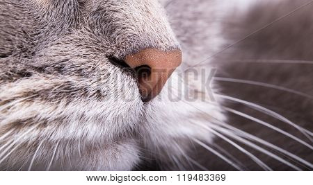 Fragment Of A Muzzle Of A Gray Cat - A Nose And Moustaches