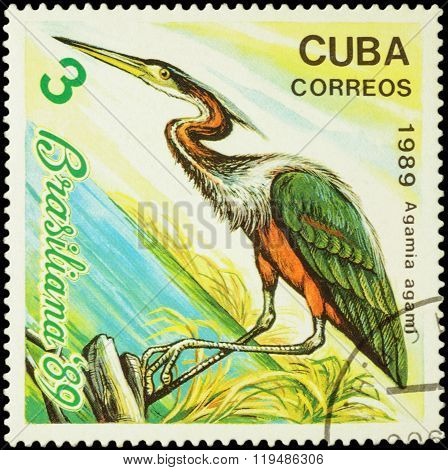 Agami Heron (agamia Agami) On Postage Stamp