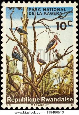 Marabou Storks On Postage Stamp