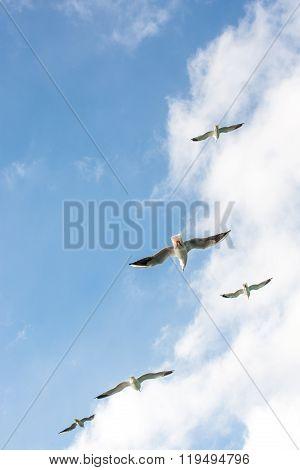 Seagulls in sky