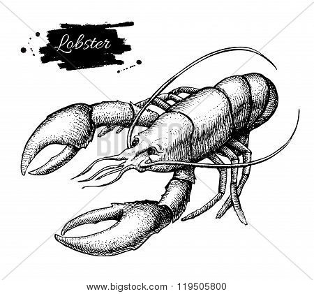 Vector Vintage Lobster Drawing. Hand Drawn Monochrome Seafood Il