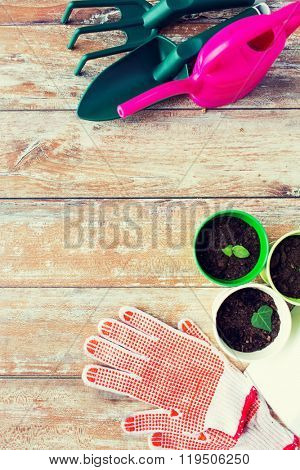 gardening and planting concept - close up of seedlings, garden tools and gloves on table