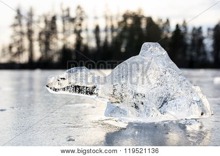 Chunk of ice looks like imagery animal