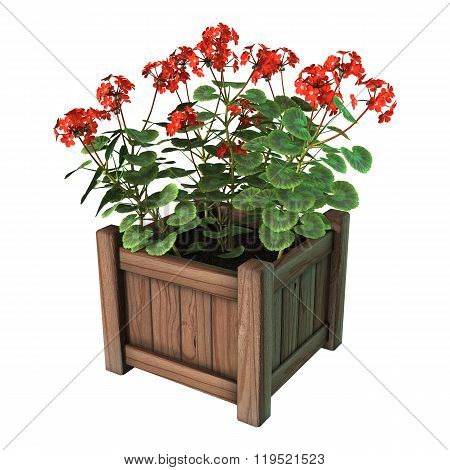 Red Geranium Planter On White