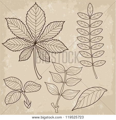 Set Of Different Type Leaves, Biology, Contour, Vintage Style. Leaves Of Grass. Leaves View. Leaves Falling. Leaves Background. Tree Leaves. Vector Illustration. Autumn Leaves. Fall Leaves.
