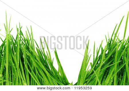 Fresh green grass