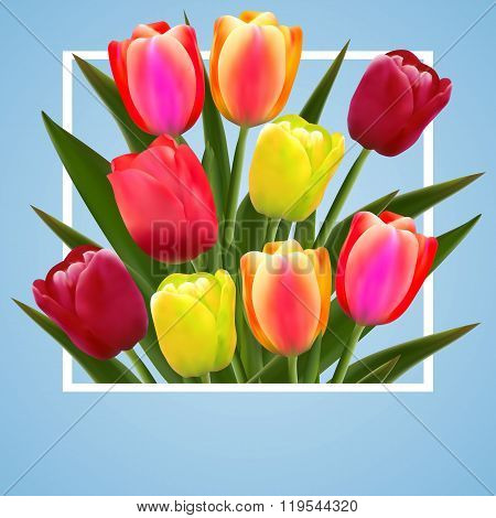 tulip flower design background floral card art