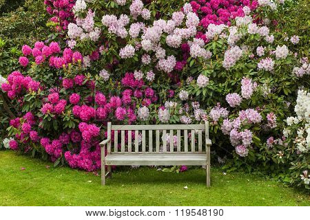 Quite garden corner with rhododendrons.