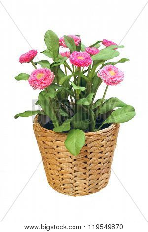 Artificial flower in a wicker pot, isolated on white.