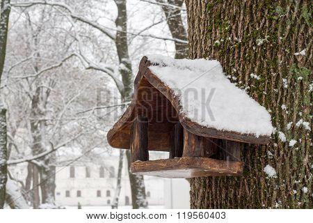 Feeder for Bird. Winter