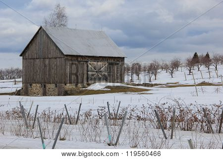 Grape vines in winter on Old Mission Peninsula near Traverse City, Michigan