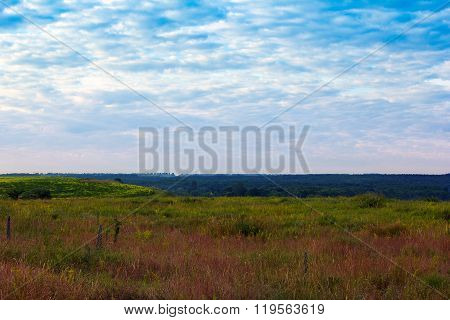 Grassy Valley, Trees And A Cloudy Blue Sky