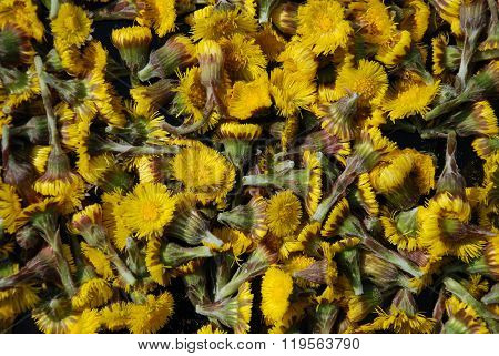 A Heap Of Coltsfoot