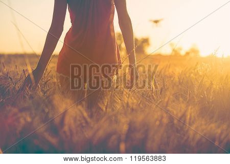 Sexy Young Girl At Sunset In Fields Touching Corn.