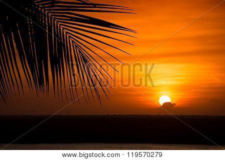 Beautiful Yellow Sunset With Palm Tree Leaf
