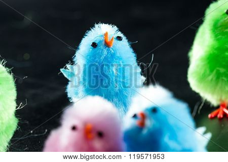 Small Spring Chicks