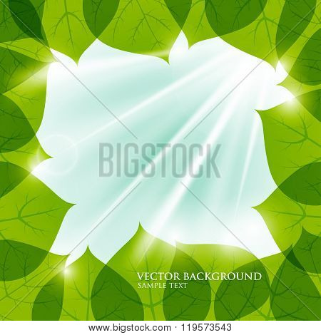 Vector frame of leaves. Natural background. The sun's rays filte