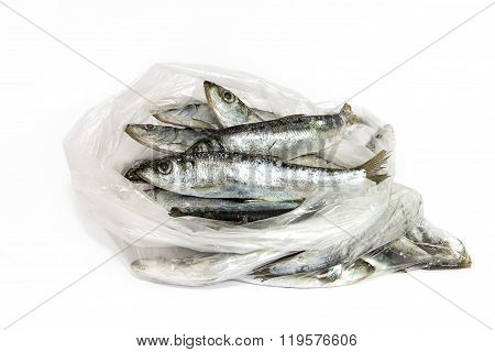 The Fish Is Thawed In A Transparent Package