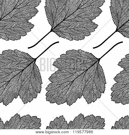 Hawthorn Leaf Skeleton Pattern