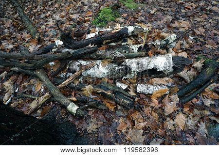 Decomposing Branches